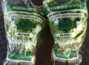 Embalagem para alface hidropônico